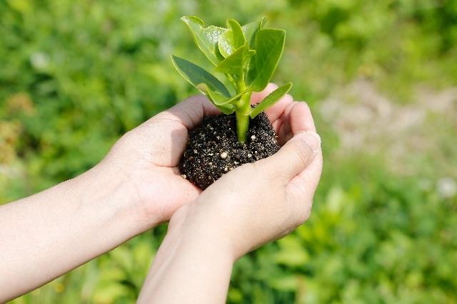 埼玉の施工業者に植栽工事を依頼するなら~庭のリフォームも【株式会社サカタ】にお任せ~